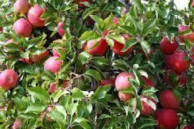 قرنطینه نباتی و برخي از اصول و استانداردهاي مرتبط با قرنطينه داخلي